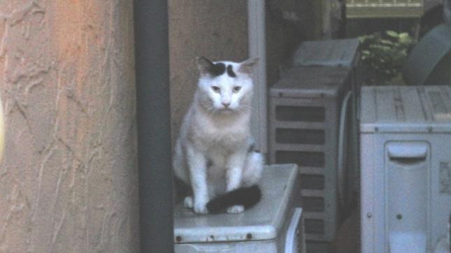 05095幽霊じゃないよ猫です (1)