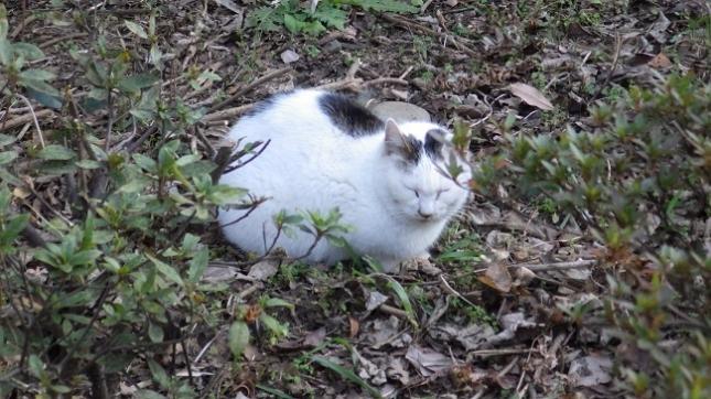 ③267小田原猫170128ブログ